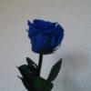 253道 プレゼントは「言葉」と「お花」のセットを推奨します(笑)