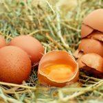 544道 世界は卵のようなもの。なにかを産みだすには目前の世界を破壊せなばならん