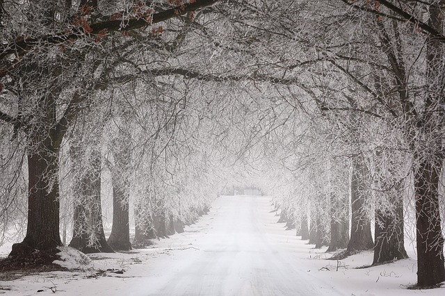 雪と人と生き方