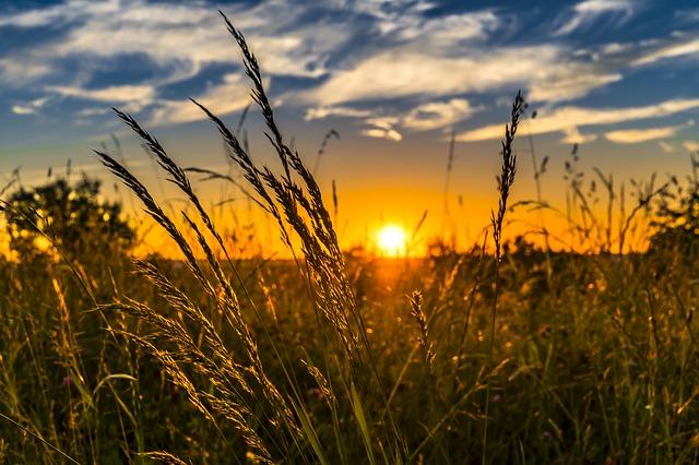 農業の法則・自然の法則