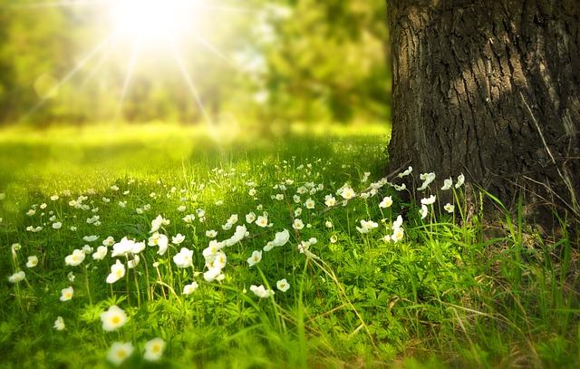 足元の花にも美しさはある
