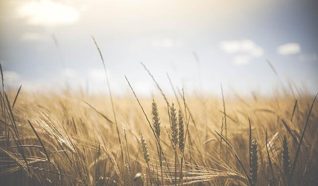 名言・格言に学ぶ農業的生き方